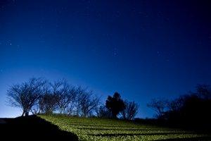 夜景と茶畑