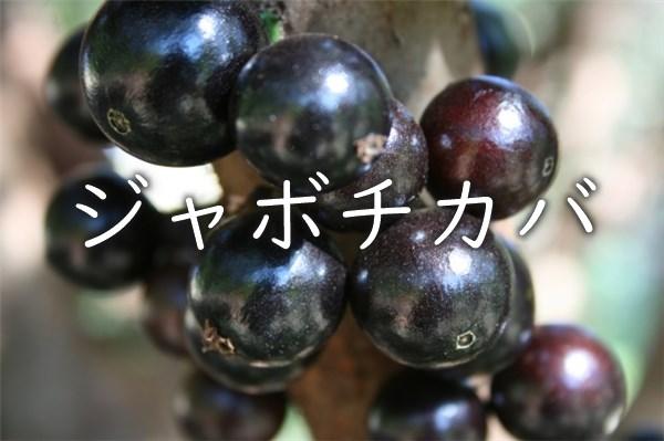 ジャボチカバの果実