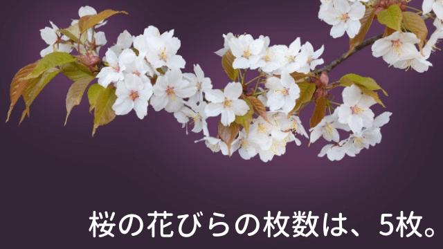 桜の花びらの枚数は、5枚。