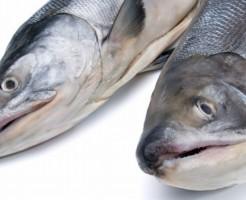 2匹の新巻鮭