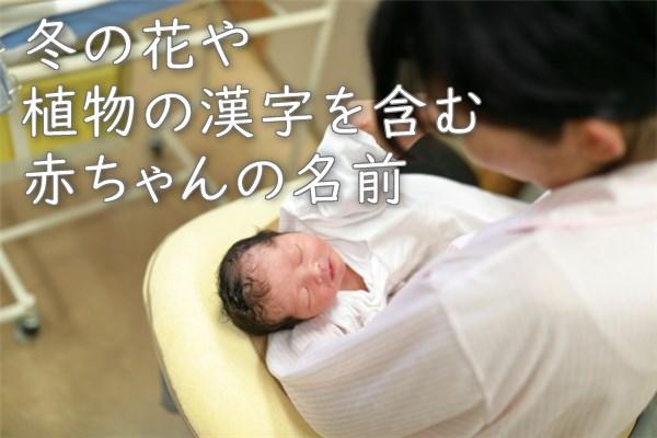 冬の花や植物の漢字を含む赤ちゃんの名前