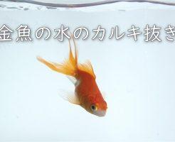 金魚の水のカルキ抜き