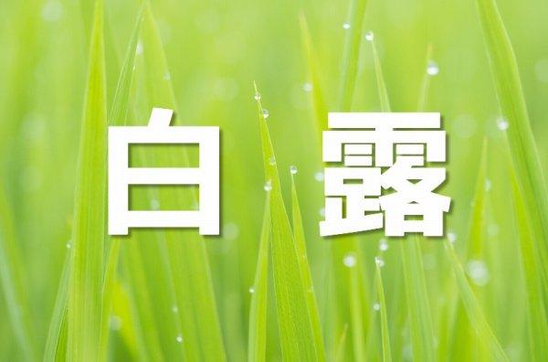 朝露が降りた草原