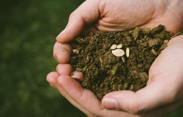 土をすくう両手