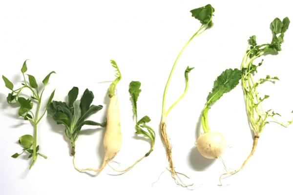七草粥の効果と効能