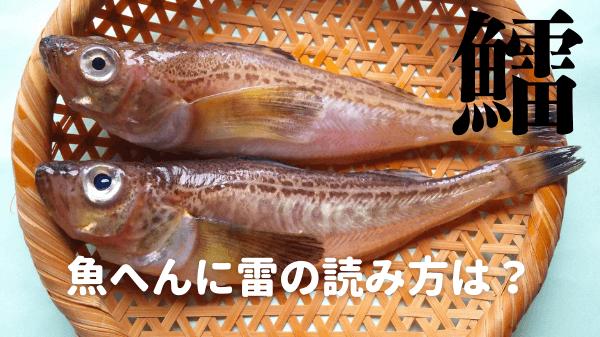 魚へんに雷の読み方は?【鱩】と書く意味や由来もくわしく!