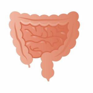 大腸と小腸
