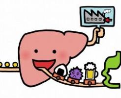 胃と消化物