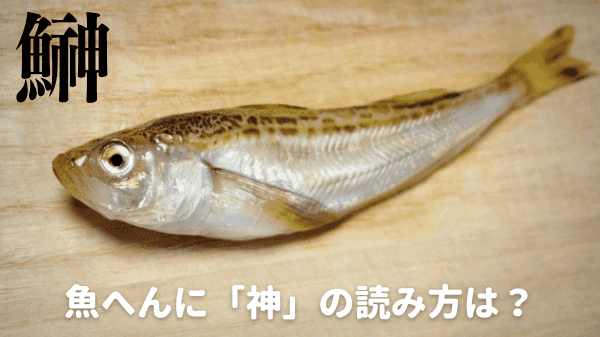 魚へんに神の読み方は?【鰰】と書く理由は2つもあった!