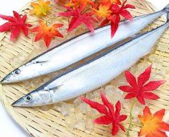ザルに乗った2匹の秋刀魚