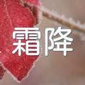 紅葉した葉に付いた朝霜