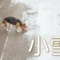 小雪が降った路面と犬
