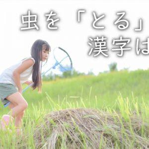 虫を「採る・捕る・獲る」。漢字ではどう書くのが正解?