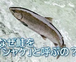 なぜ鮭をシャケと呼ぶの?